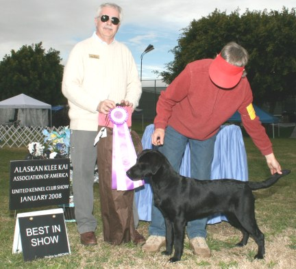 UKC Best In Show CH Longplain Tessera, at 8 months